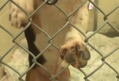 Bloomington Animal Shelter Breaks Adoption Records in 2014